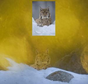 Terje Hellesøs bild med bildbyråbilden inklippt